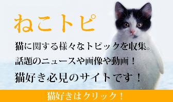 猫好きが集まるサイトねこトピ