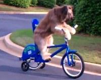 bikedogi