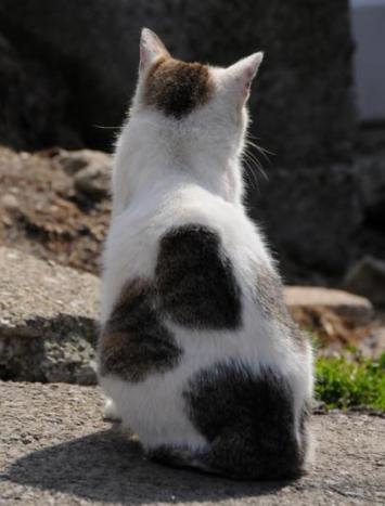 猫の画像 p1_37
