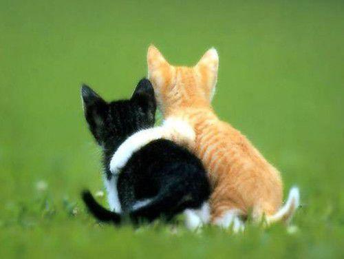 癒しの子猫の友情
