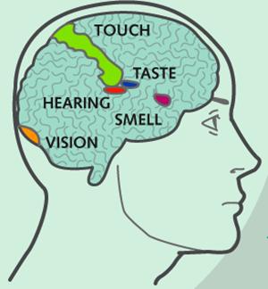Synesthesia2