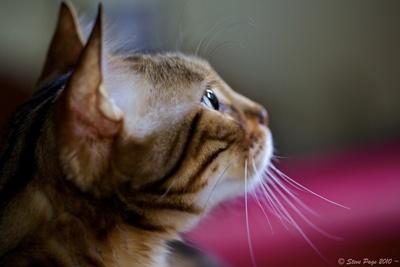 cat-eye