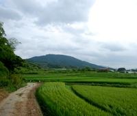 miwayama-i