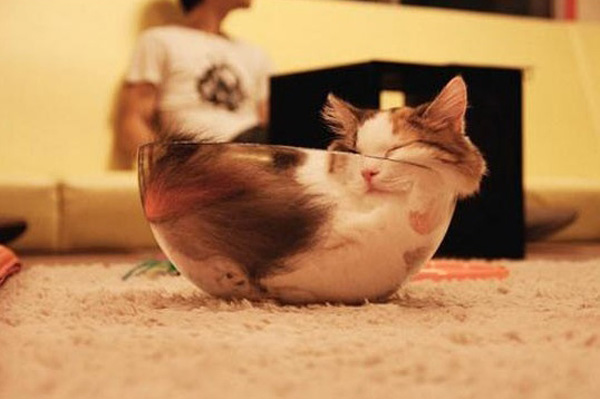 cats_are_liquids_01