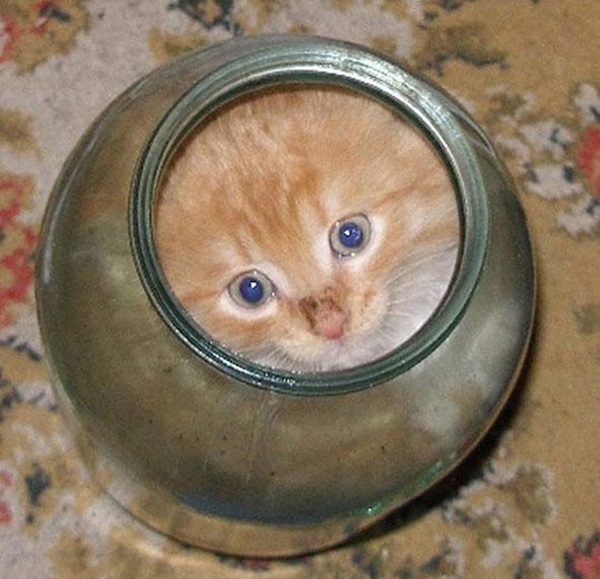 cats_are_liquids_09