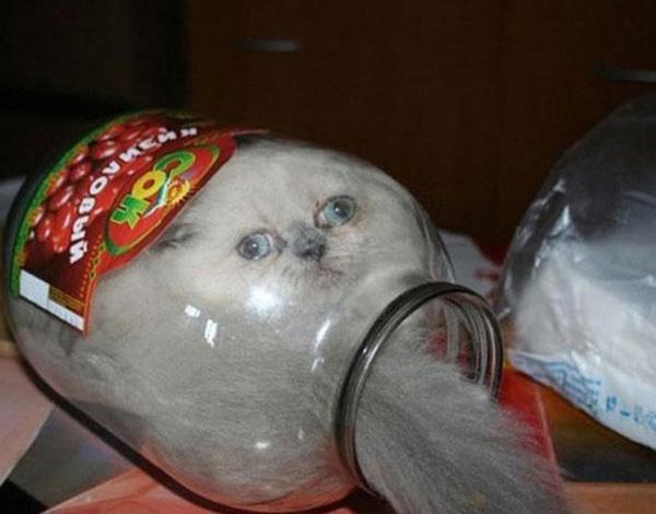 cats_are_liquids_12