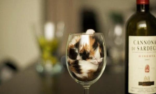 cats_are_liquids_13