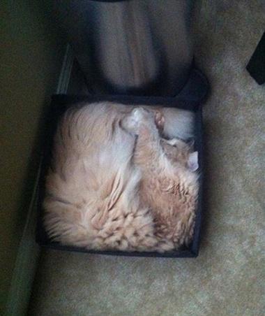 cats_are_liquids_14