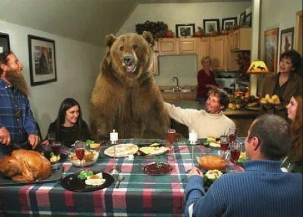 bear13-620x