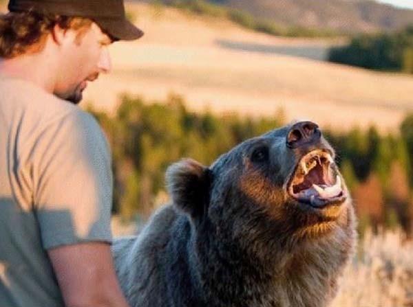 bear14-620x