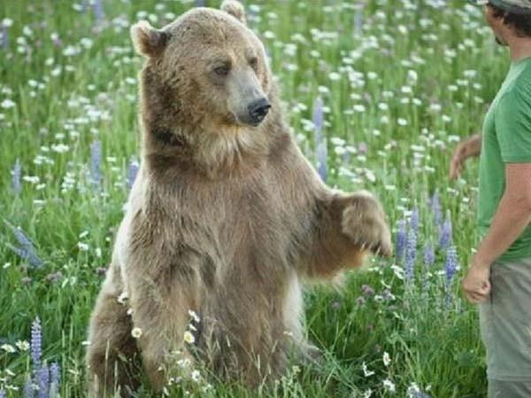 bear15-620x