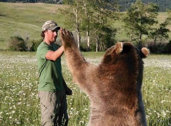 bear17-620x