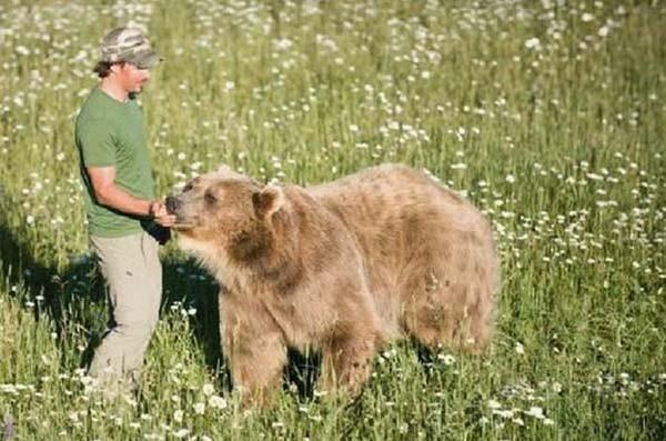 bear9-620x