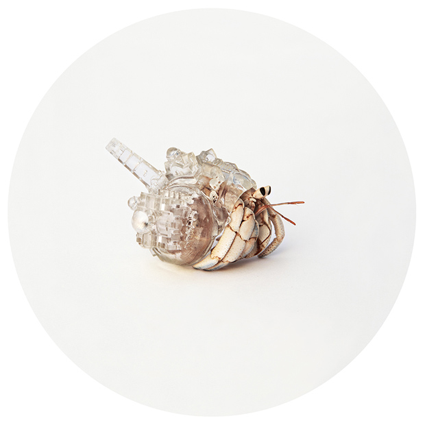 Hermit-Crab-Shell-Santorini