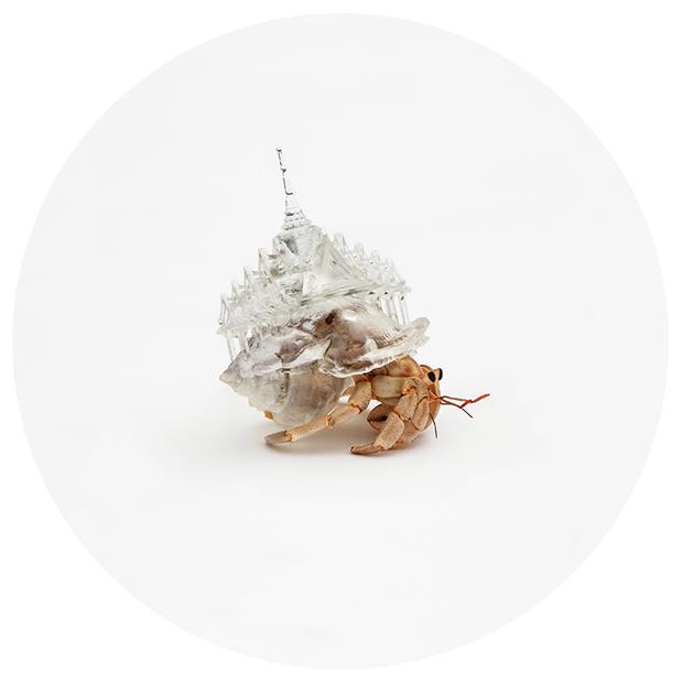 Hermit-Crab-Shell-Thailand