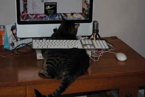 getoutoftherecat.tumblr.com_-620x