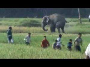 恐怖!ゾウに襲われてしまう映像
