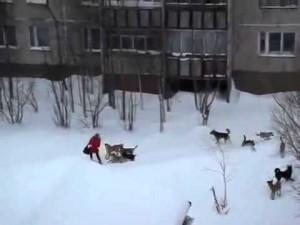 恐怖!突如野犬の集団に襲われてしまう動画