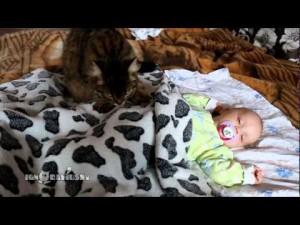赤ちゃんをふみふみする先輩猫