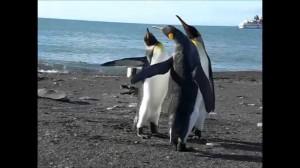ペンギンたちの静かなる三つ巴の戦い!