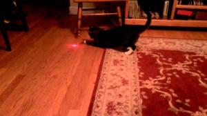 頭の上にレーザーポインターを装着した猫、、、一生遊べる!