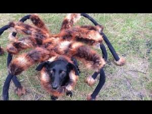 犬に蜘蛛のぬいぐるみを被せただけのドッキリが意外にも怖すぎる!!