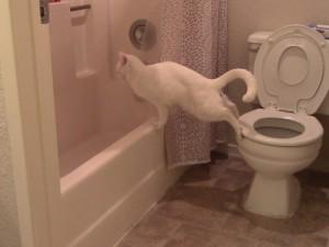 【閲覧注意】力みすぎた猫が脱糞してしまう。。。