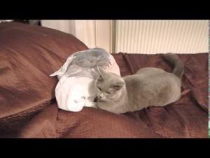 ビニール袋で遊ぼうと思ってた猫・・・思わぬ逆襲が!!
