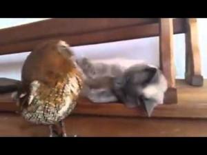 ちょっかいを出す猫、動じないフクロウ、いいコンビ!