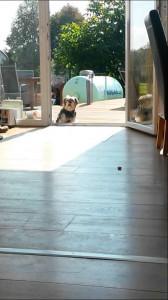 ドアが閉まっていると勘違いしている犬が可愛い