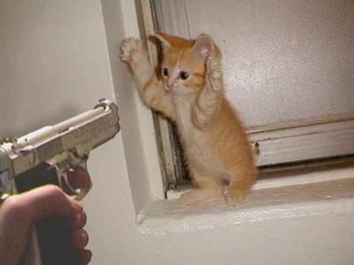 20061102183515!Cat_burglar