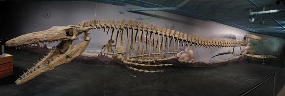 Tylosaurus_Bruce