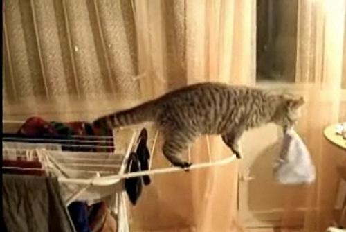 Underwear-Cat