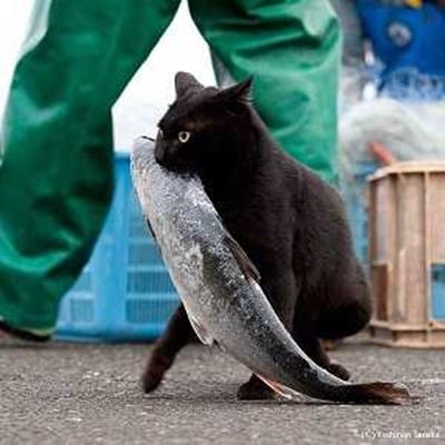 osakana-cat