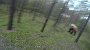 恐怖、楽しいサイクリング中に巨大なクマと遭遇!
